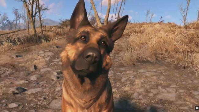 Fallout 76 может получить домашних животных